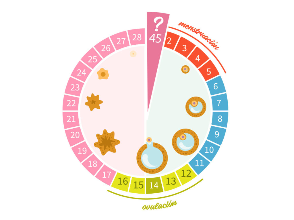 Calendario De Periodo Menstrual.Calendario De Un Ciclo Menstrual Conocelo De Principio A Fin